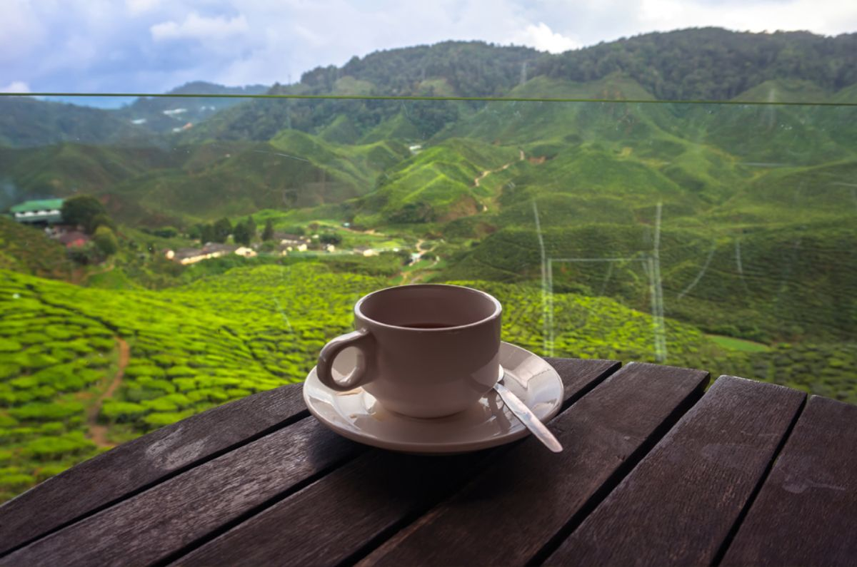 Cup of tea in front of plantation